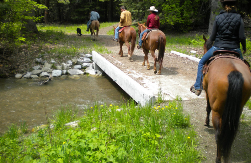Horseback riding at Mountain Springs Lodge.