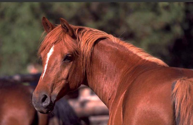 Horses at Siwash Lake Ranch
