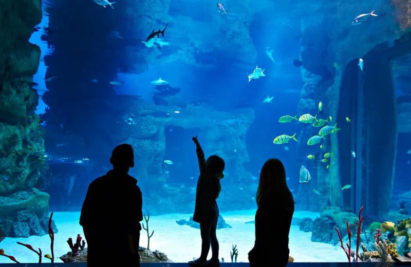 Aquarium near Vickery Resort On Table Rock Lake.