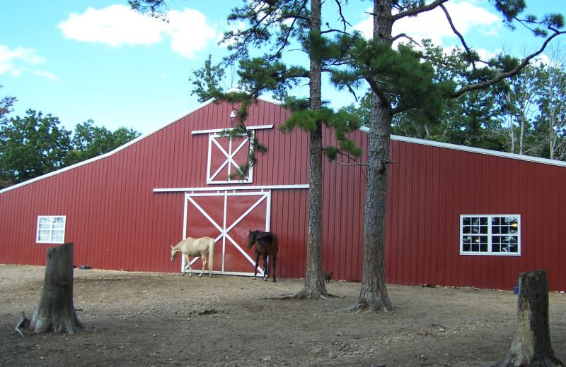 Horses at Bear Mountain Log Cabins.