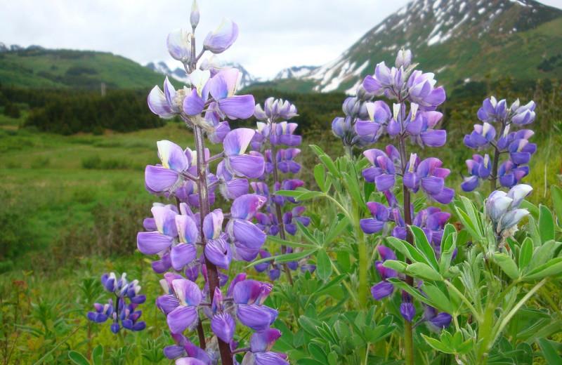 Flowers at Kenai Fjords Glacier Lodge.