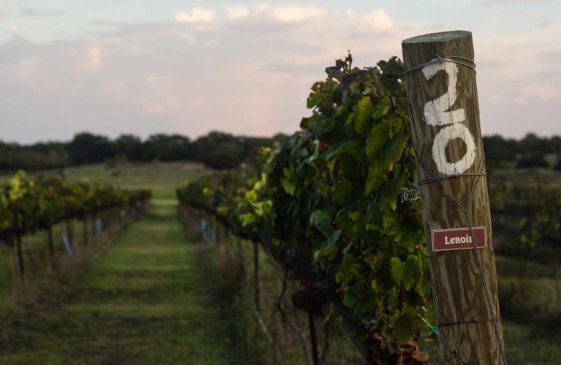 Vineyard at The Vineyard at Florence.