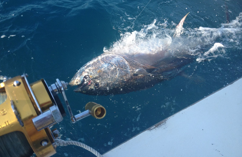 Big catch at Oasis Suites.