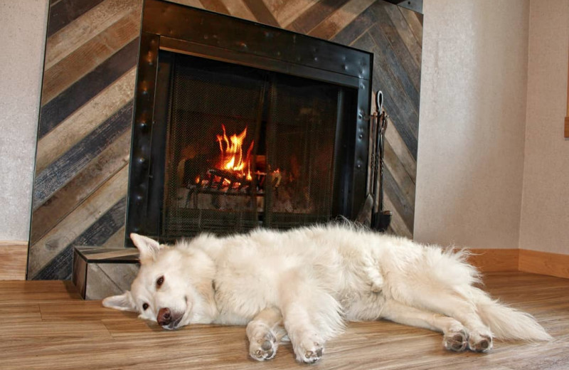Pets welcome at Tunnel Mountain Resort