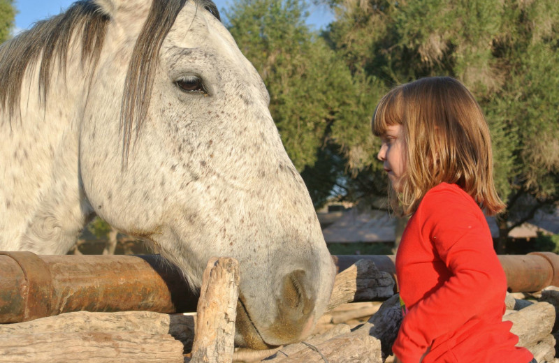 Meeting the horses at Tanque Verde Ranch.