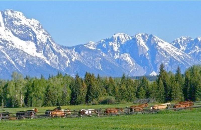 Mountains near Moose Head Ranch