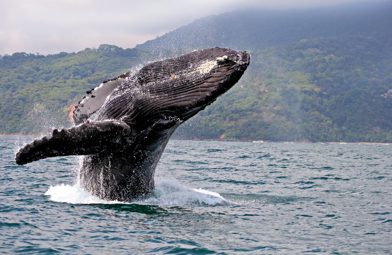Whale watching near Costa Rica Luxury Lifestyle.