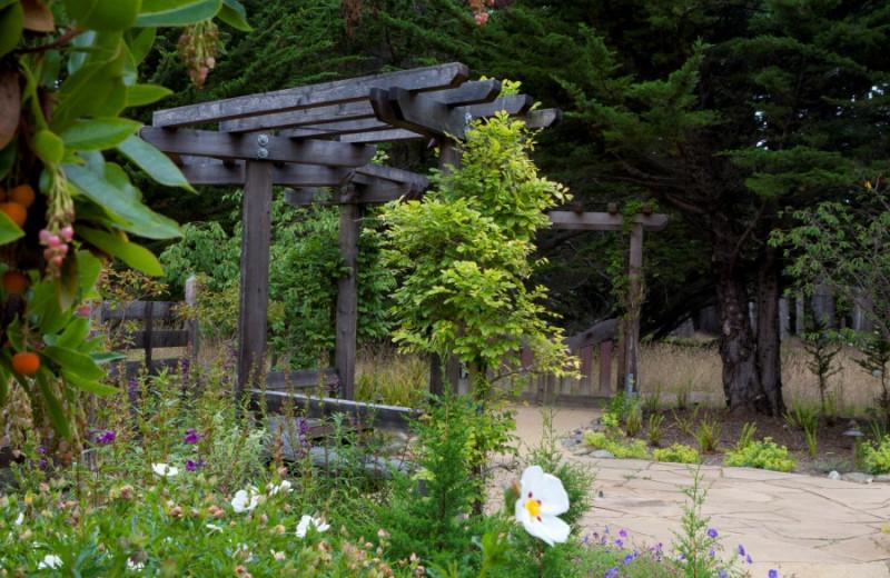 Garden view at Seal Cove Inn.