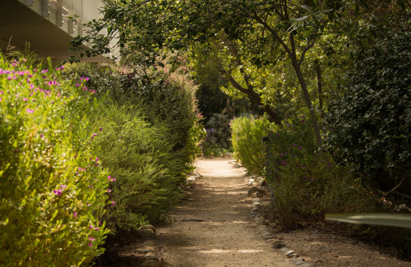 Path at Carmel River Inn.