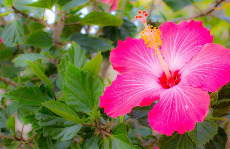 Garden at Shoreline Island Resort.