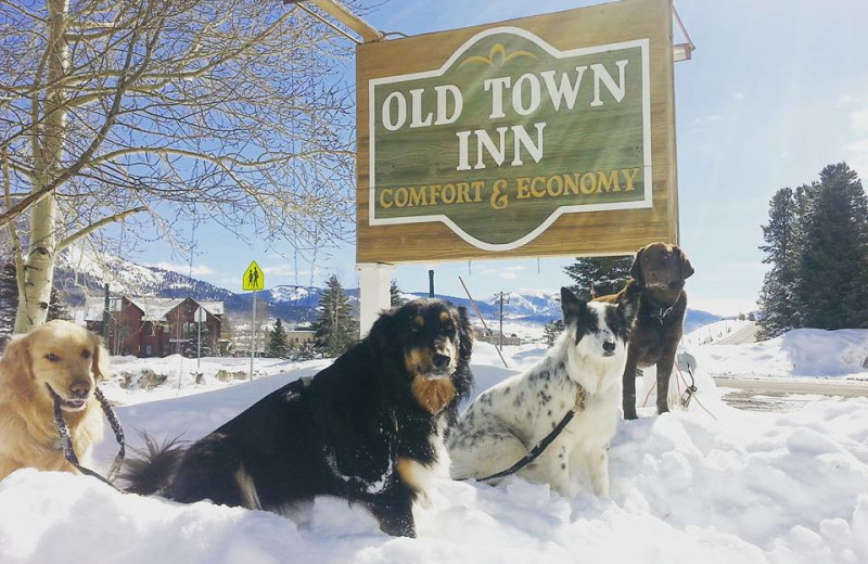 Pets welcome at Old Town Inn.