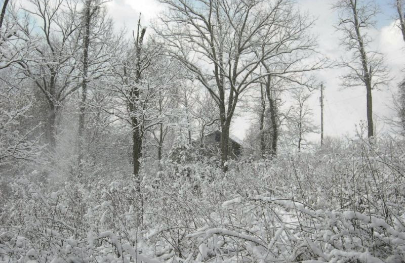 Beautiful Snow at South River Highlands Retreat