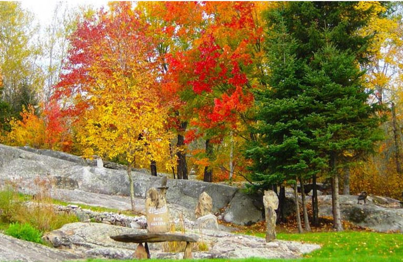 Fall colors at Pine Aire Resort.