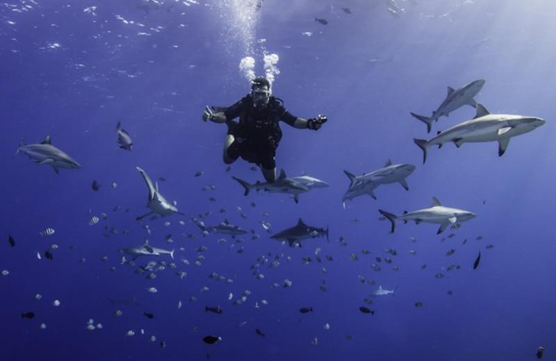 Diving at Manta Ray Bay Hotel & Yap Divers.
