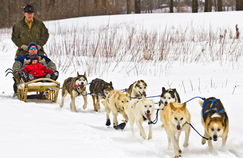 Dog sled at Cragun's Resort and Hotel on Gull Lake.