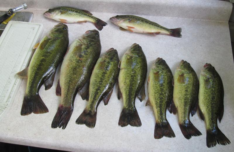 Fishing at SweetWater Resort.