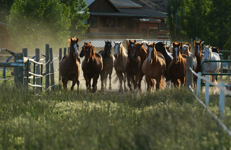 Horses at Myra Canyon.
