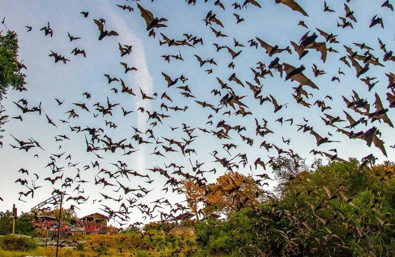 Bats near Walnut Canyon Cabins.