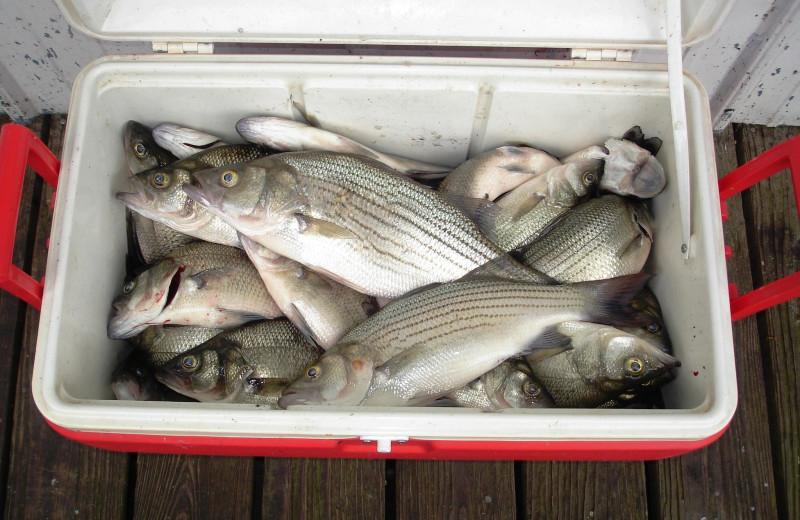 Fish caught at Big Bear Resort.