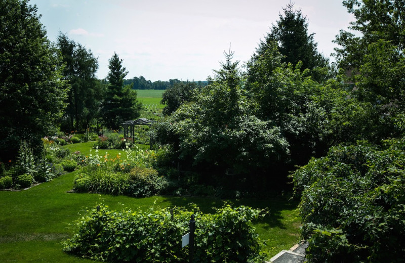 Garden at Strathmere Retreat