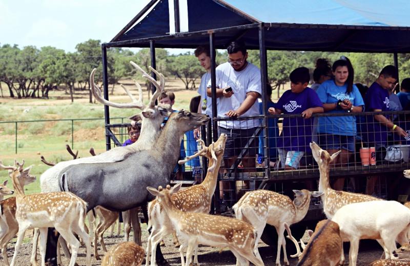 Safaris at The Exotic Resort Zoo.