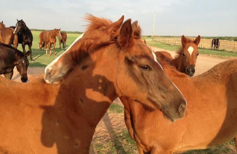 Horses at J Bar J Ranch