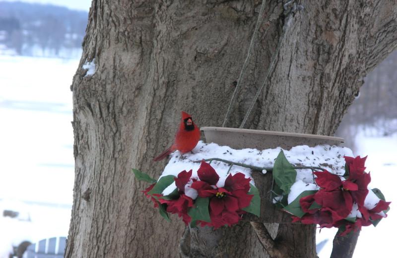 Bird feeder at Chateau Lake Logan.