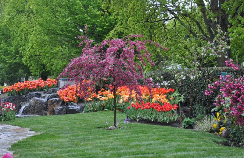 Garden at Albion Manor.