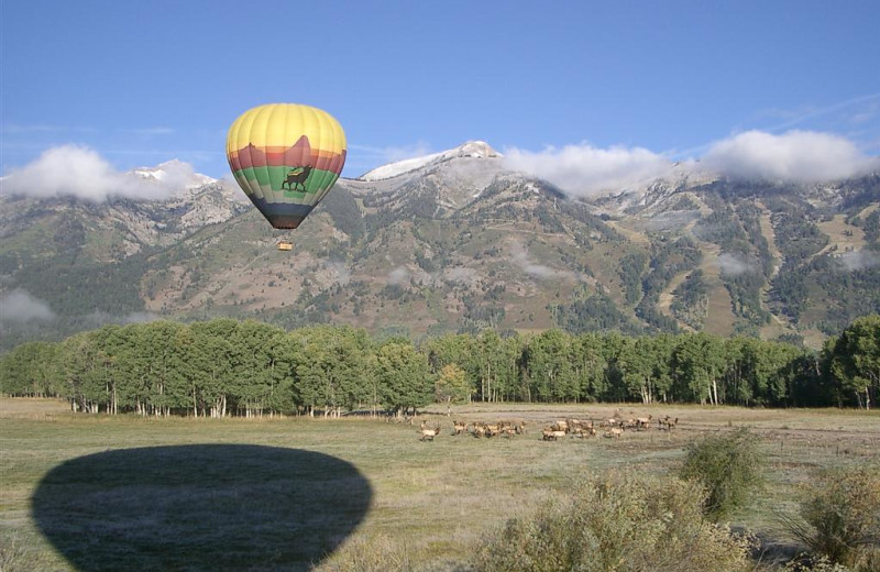 Hot air balloon near Rusty Parrot Lodge.
