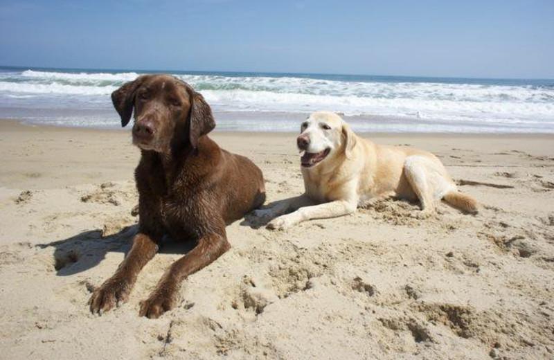 Pets welcome at Sandbridge Realty.