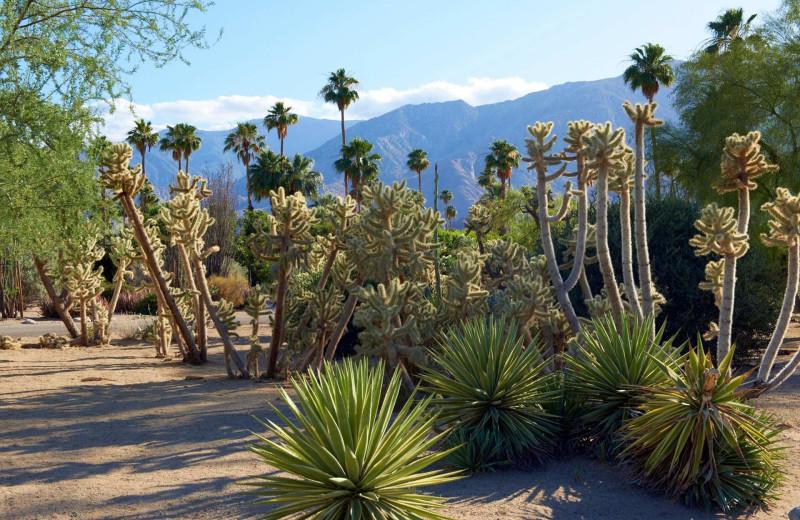 Cactus garden at Smoke Tree Ranch.