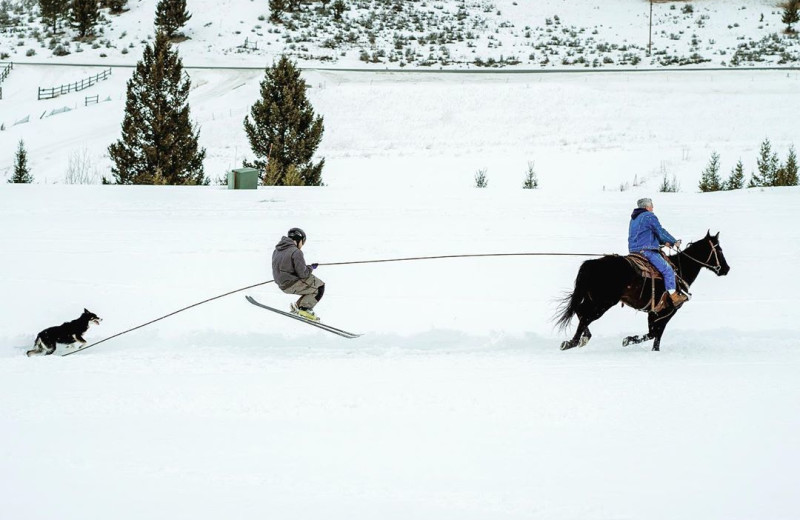 Horse skiing at Hardscabble Ranch.