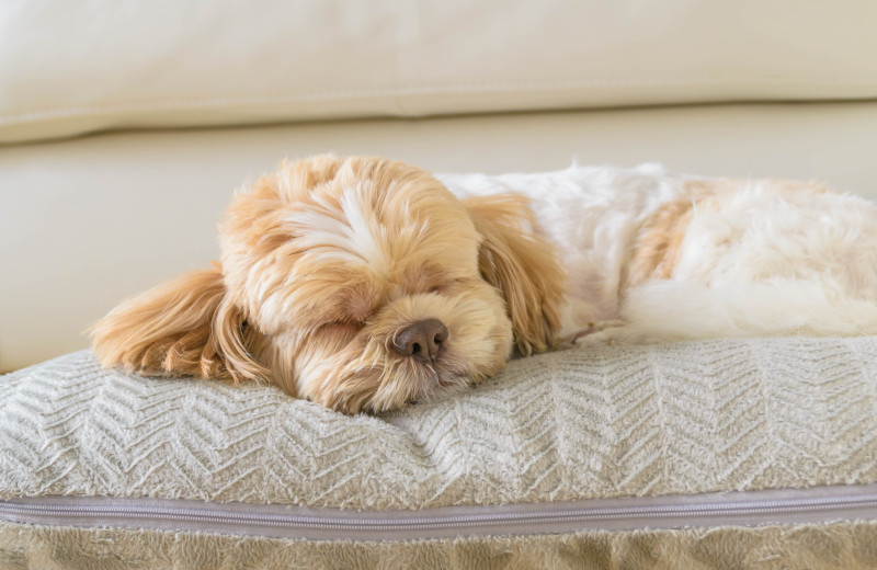 Pets welcome at Family Time Vacation Rentals.