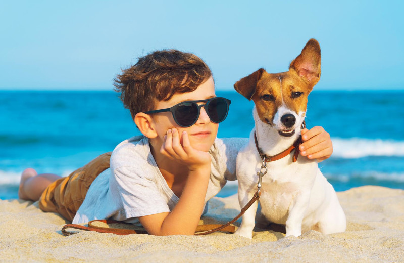Pets welcome at Sunset Properties.
