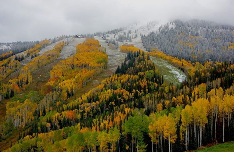 Fall colors at Aspen View Lodge.