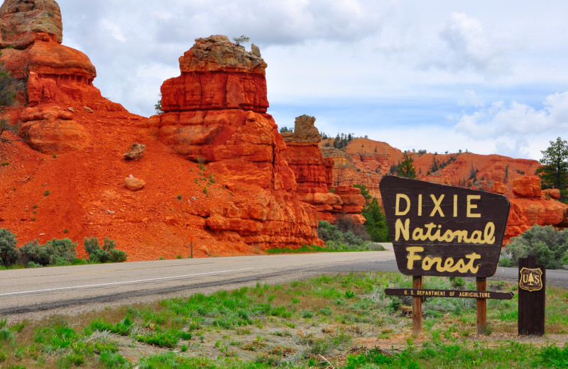 Dixie National Forest near Marianna Inn.