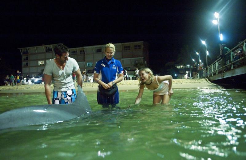 Feeding dolphins at Tangalooma Wild Dolphin Resort.