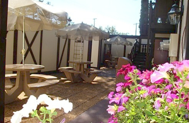 Patio Area at The Beach Haus Resort