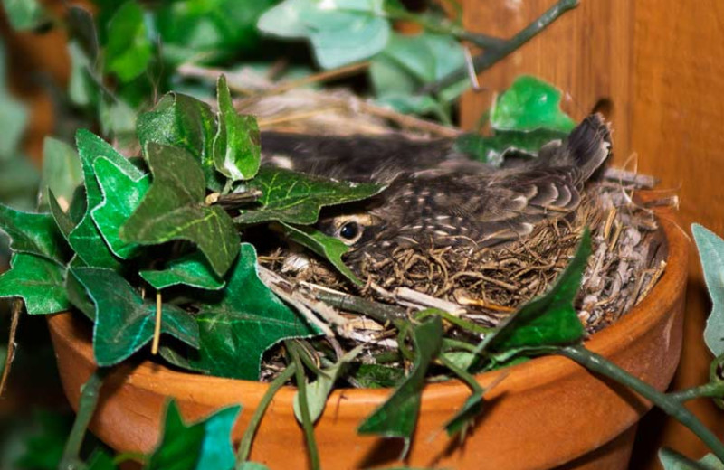 Bird at 4 Seasons Inn.