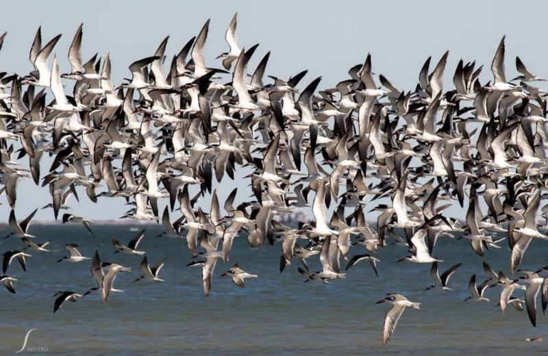 Birds at The Lighthouse Inn at Aransas Bay.