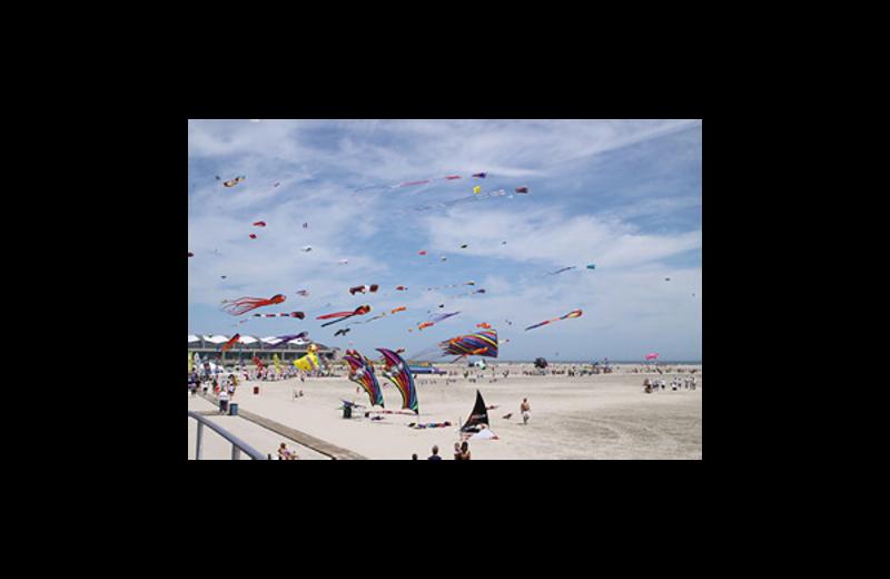 Flying kites at Florentine Family Motel.