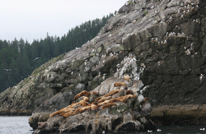 Seals at Kenai Fjords Glacier Lodge.