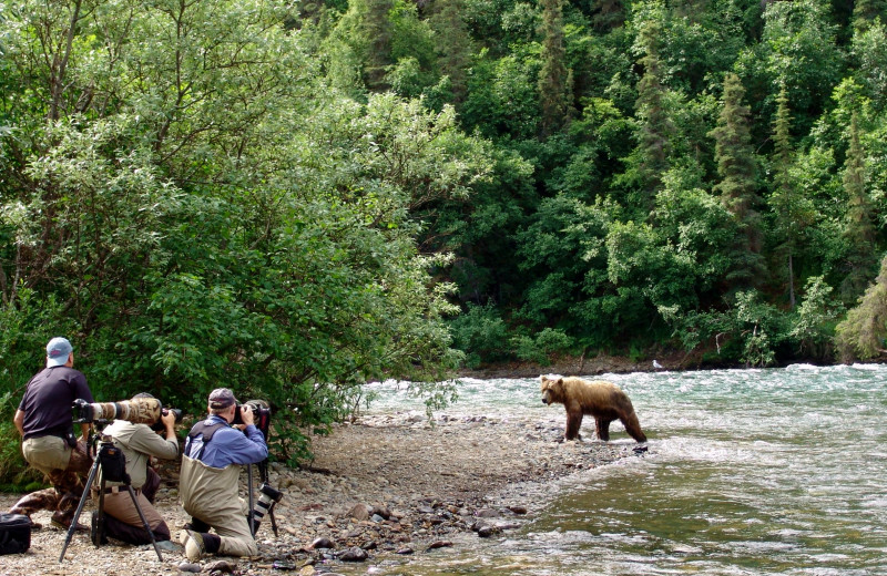 Bear photography at Alaska Trophy Adventures Lodge.
