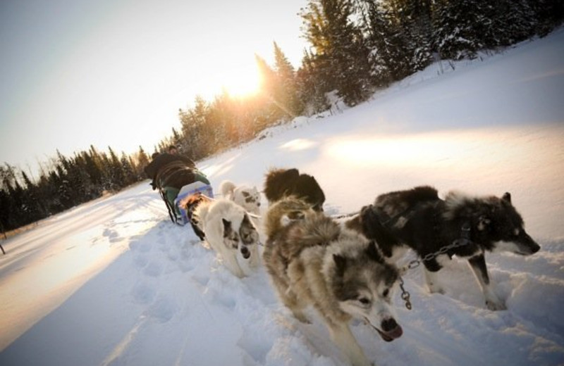 Dogsled races at Timber Trail Lodge & Resort.