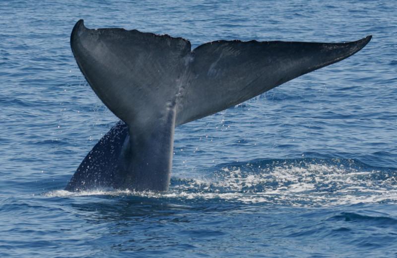 Whale watching at The Ritz-Carlton, Laguna Niguel.