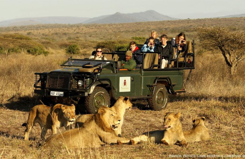 Game drive at Thanda Private Game Reserve.