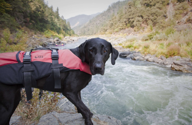 Pets welcome at Morrison's Rogue River Lodge.