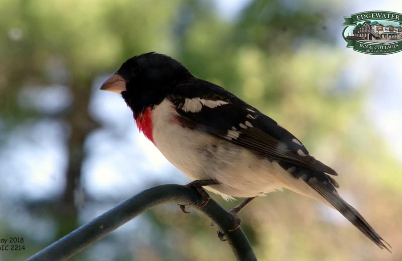 Bird at Edgewater Inn & Cottages.