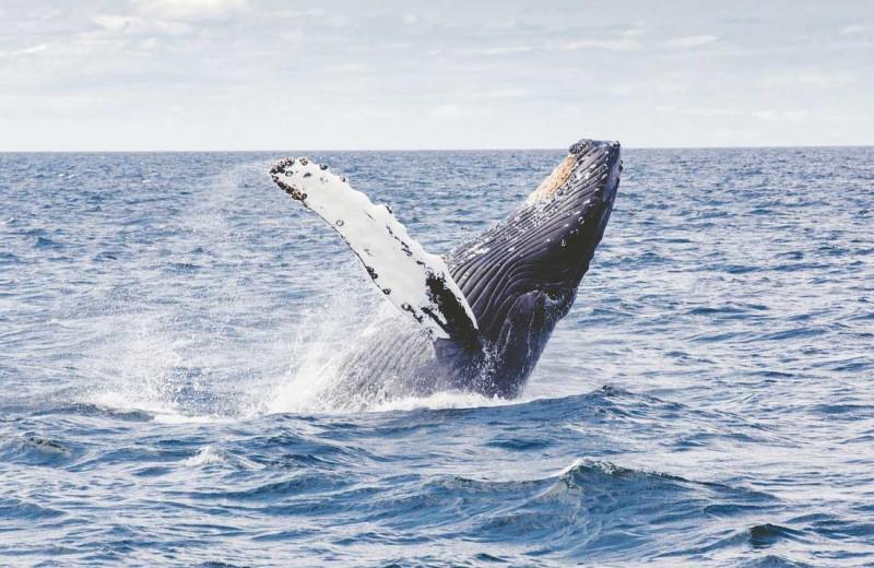Whale watching at Carroll Villa.