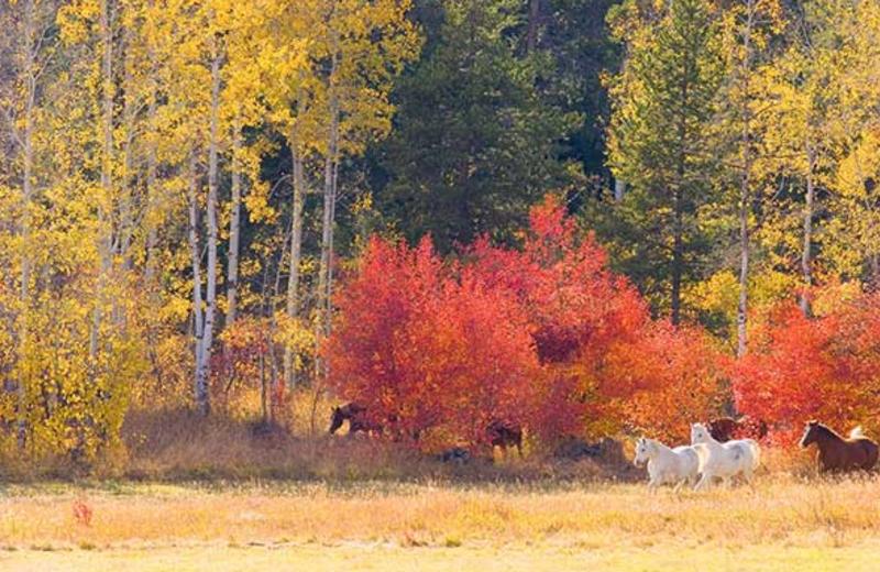 Horses at Trail Creek Ranch.